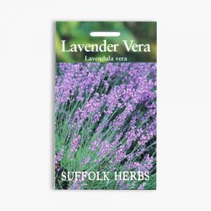 Lavender Vera Seeds
