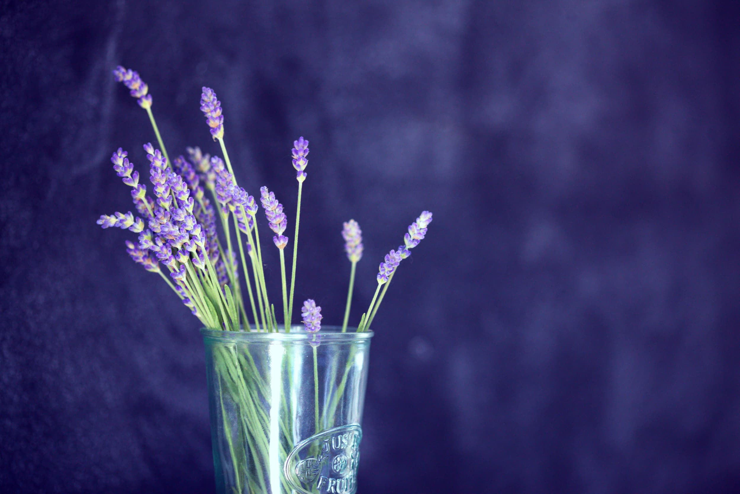 Lavender With Fish Jersey Lavender Farm Blog Post